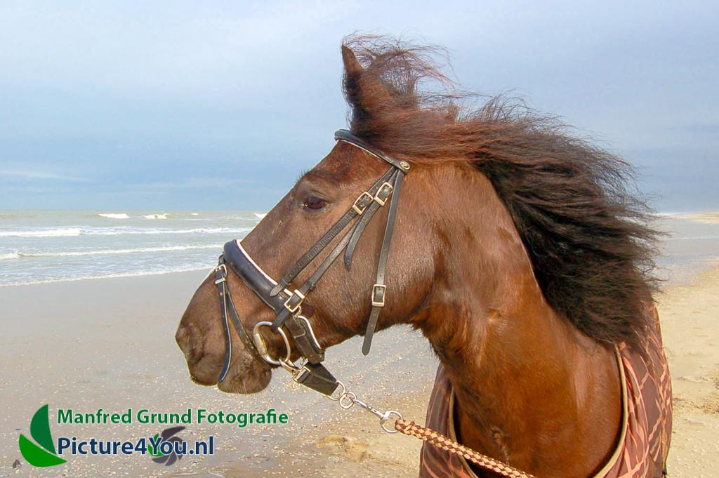 Fotoshoot met paard - Jorien en J'Adore