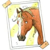 Alle pony's van Manege De Zonnehoeve