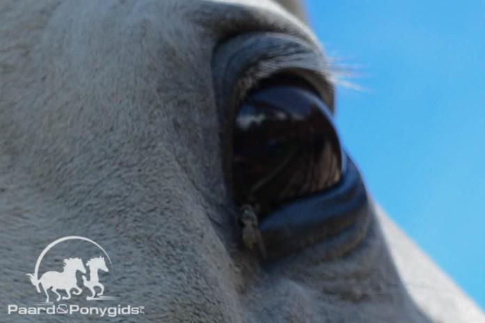 Aanval door hond kost één paard het leven