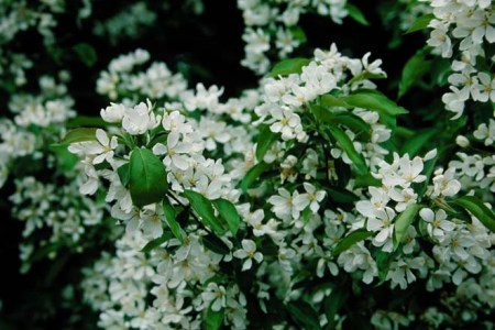 Best wild flowers shrub with small white flowers wild flowers shrub with small white flowers these flowers are very beautiful here we provide a collections of various pictures of beautiful flowers charming mightylinksfo