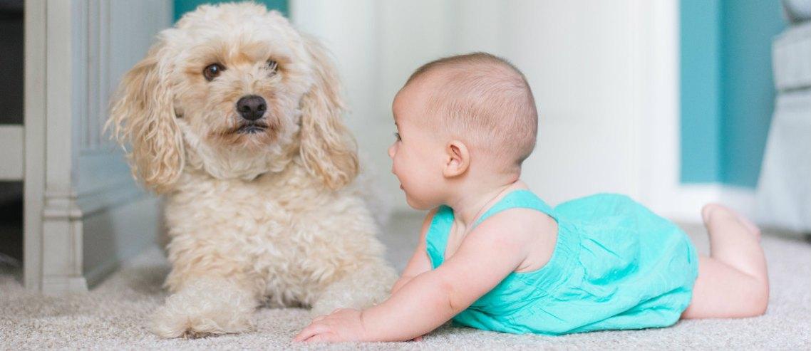 Hong Kong family insurance article