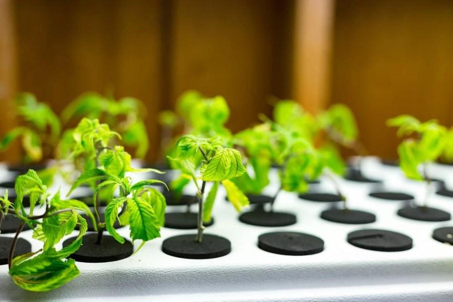 beginner marijuana seeds education