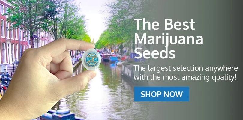 PSB-marijuana-seeds-rockville-2