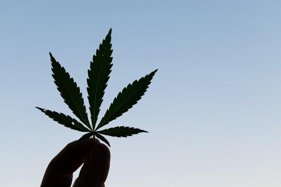 buy-marijuana-seeds-san-jose