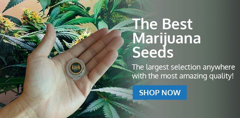 PSB-marijuana-seeds-water-2