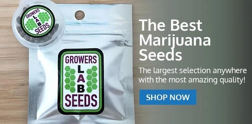 PSB-marijuana-seeds-harrisonburg-2