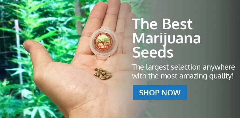 PSB-marijuana-seeds-redmond-1