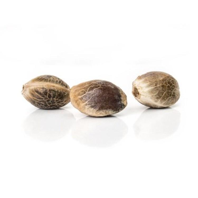 Cannabis-Digweed-Feminized-Marijuana-Seeds