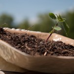 Biodegradable packaging: plant your bowl!