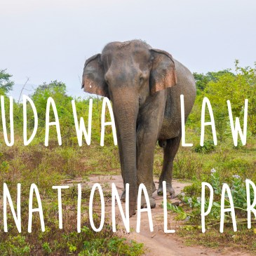 Udawalawe National Park {VIDEO}