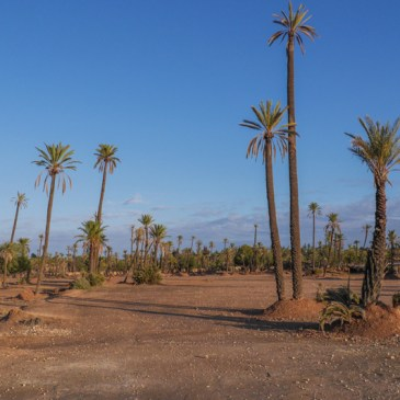 Marrakech in Pictures