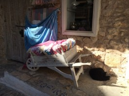 A cat from Kaş