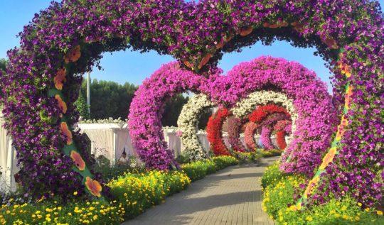 Heart Miracle Gardens | Packs Light4