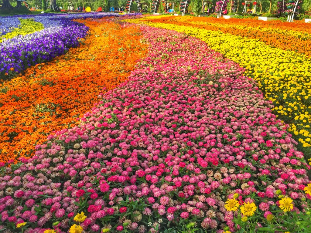 Flower Field Miracle Gardens | Packs Light7