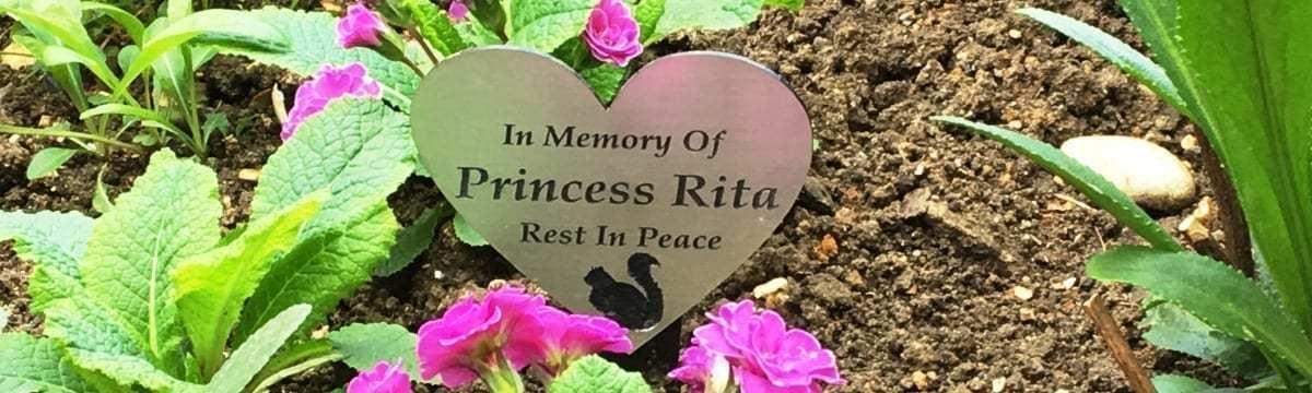 RIP Princess Rita: Saying Goodbye to a Beloved Pet