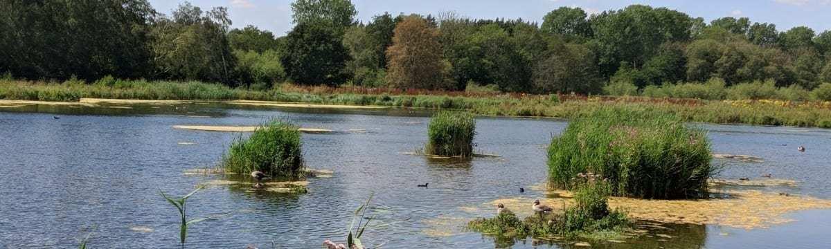 A Visit to Pensthorpe Natural Park, nr Fakenham, Norfolk