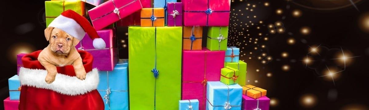 A Dog's Christmas Wish List