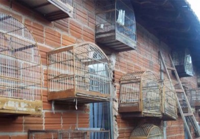 """Momento """"ÉPRACABÁ"""": Funcionários do IAP de Cornélio acusados de receptação de animais silvestres"""