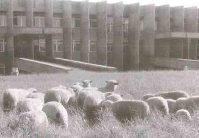 Cadê as ovelhinhas do Wilson Moreira?