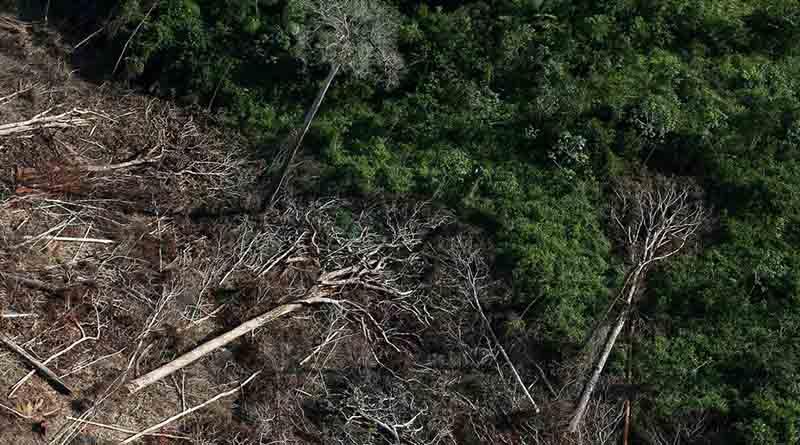 Desmatamento na Amazônia bate novo recorde