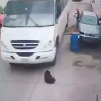 Indigna chofer que atropelló perro en Huixquilucan #VIDEO (IMÁGENES FUERTES)