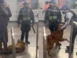 Perrito pide que le soben la pancita tras ser rescatado de las líneas del Metro #VIDEO