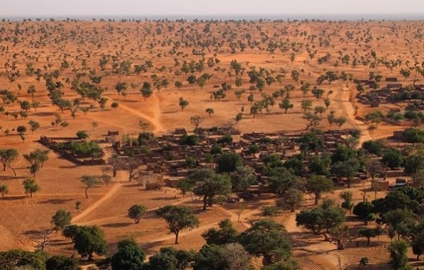 Sorprende a científicos el crecimiento de más de 1,800 millones de árboles en el desierto del Sahara