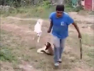 Perrita es asesinada a machetazos en Ixtapaluca #VIDEO