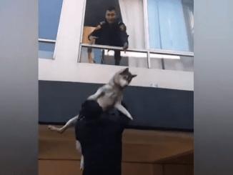 En la Nápoles, perrito es rescatado por los policías al quedar atrapado en un incendio #VIDEO