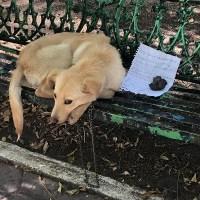 Abandonan a perrito en banca de CDMX con nota de disculpa