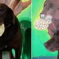 """""""El conchas"""", un perrito amante del pan dulce, se vuelve viral en redes"""