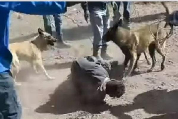 Hasta los perros le cayeron a este ladrón en Querétaro #VIDEO