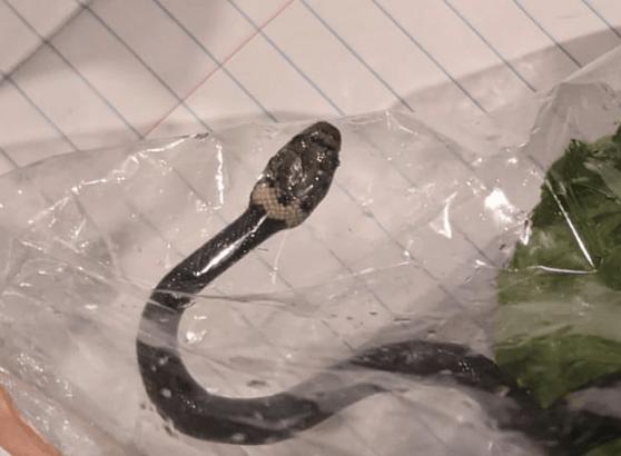 Mujer encuentra serpiente en bolsa de lechuga