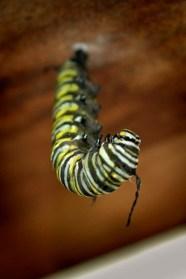 Monarch01 lo-res