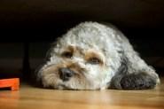 Dog-Sit02 06-27-11 lo-res