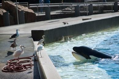 SeaWorld10 02-02-12 lo-res