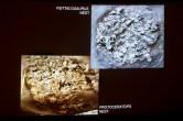 Nursery fossils