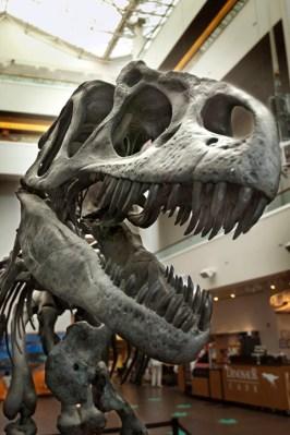 Allosaurus in the atrium