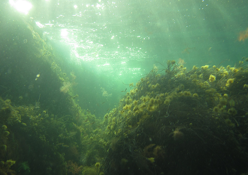Hovs Hallar under ytan vid lite snorkling