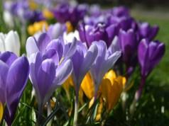 Frühling in Paderborn: Blumen im Paderquellgebiet