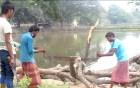 শিবগঞ্জে জেলা পরিষদের গাছ কেটে নেয়ার অভিযোগ
