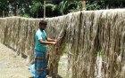 কচুয়ায় কৃষকের মুখে হাসির ঝিলিক