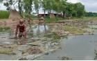 বাগাতিপাড়ায় পাট জাগে দিতে দিতে হচ্ছে কৃষককে পুকুর ভাড়া