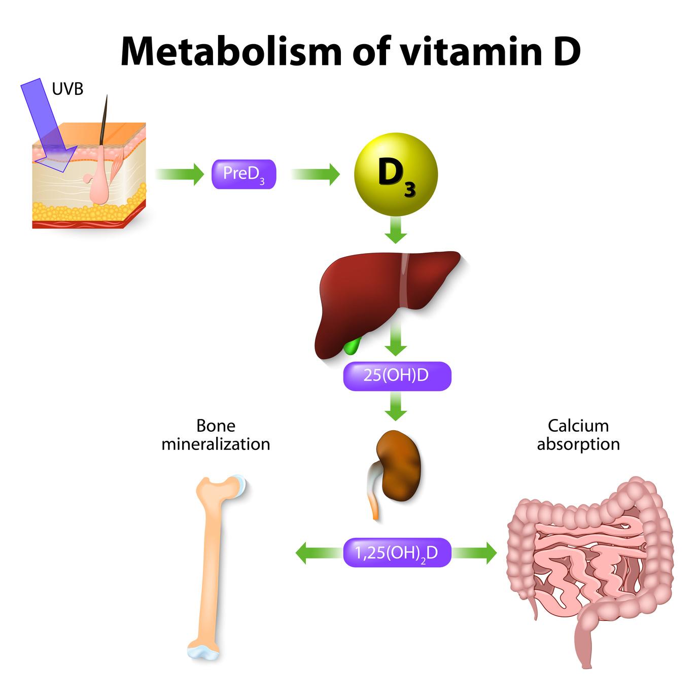 Calcium And Vitamin D In Teens Paediatric Nutrition
