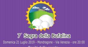 Mondragone – Novità e sorprese per la settima Sagra della Bufalina in via Venezia