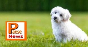 Sessa Aurunca – Gestiva un canile abusivo, proprietaria ricoverata e 34 cuccioli sequestrati