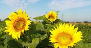 """PIGNATARO MAGGIORE – Parte """"Mamma Legalità"""", il progetto per la crescita economica attraverso il settore agricolo"""