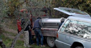 Gallo Matese / Isernia – Tragedia nei boschi del Matese, bidello 54enne schiacciato da un albero: lascia moglie e tre figli