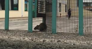 Vairano Patenora – Nella città dello storico incontro, anche i ratti vogliono andare a scuola