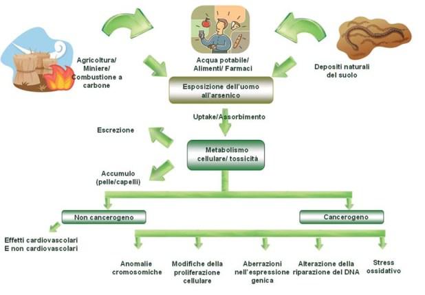 ricerca-su-inquinamento-da-arsenico2